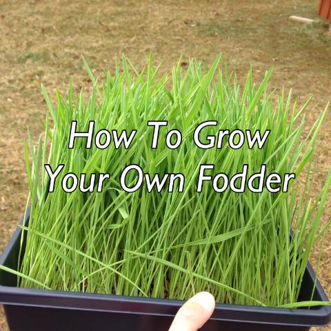 How To Grow Your Own Fodder